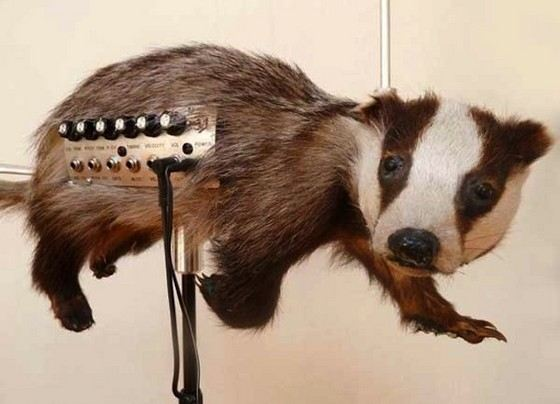 Барсучница - самый необычный музыкальный инструмент