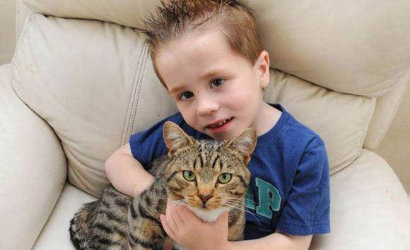 Кот стал номинантом британской премии за спасение ребенка от хулиганов