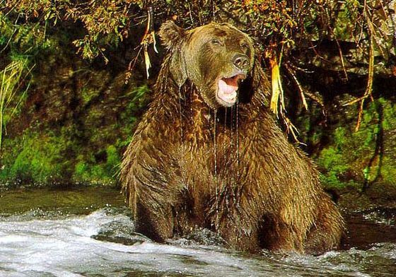 Медведь считается одним из самых опасных животных на Земле