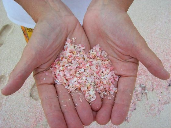 Sand on the most beautiful beach in Pink Sands