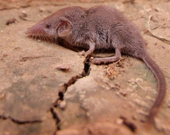 😮 Самое маленькое животное, самые крошечные животные мира  Самое Маленькое Животное в Мире