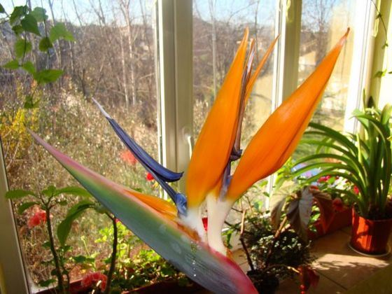 Цветок с длинным стеблем и красным цветком