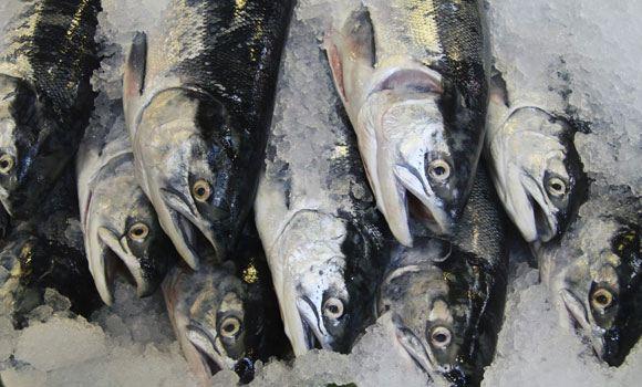 Россельхознадзор разрешил дюжине чилийских производителей поставлять в РФ морепродукты