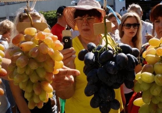 На Дону есть свои уникальные сорта винограда