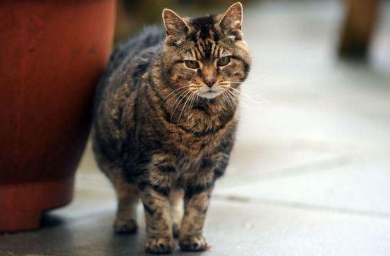 Кошка-долгожительница Люси