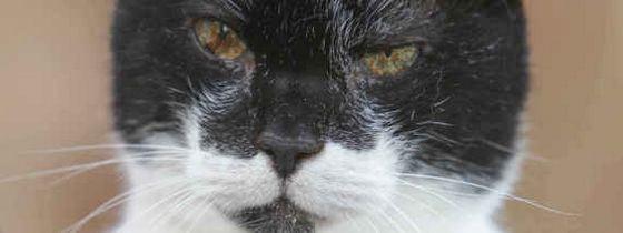 Крем Пафф был признан самым старым котом