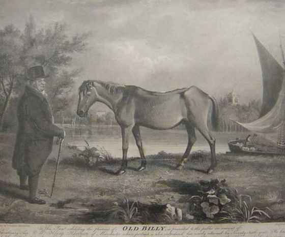 «Старый Билли» - самая старая лошадь в истории