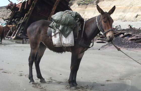 Mule is the most famous hybrid animal.