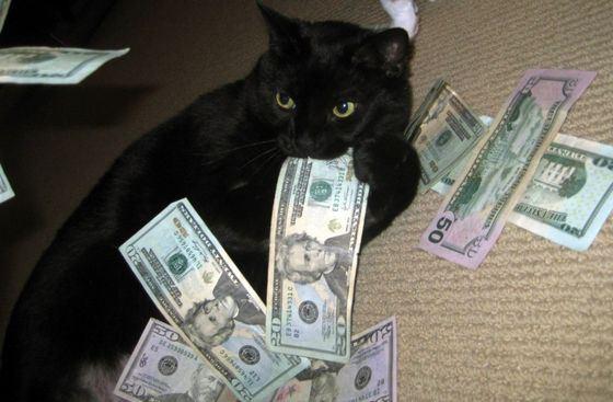 Кот Томмазино стал обладателем огромного состояния