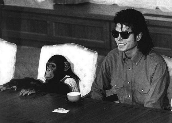 Обезьянка Бабблс стала богатой благодаря Майклу Джексону