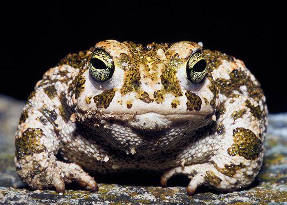 Ученые провели неожиданные исследования жизни жаб