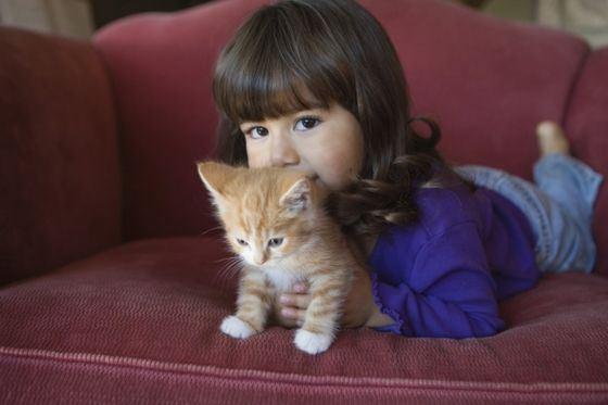 Часто аллергики не могут жить в одном доме с животными из-за наличия шерсти