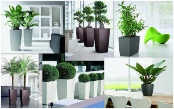 Выбор вариантов озеленения многообразен