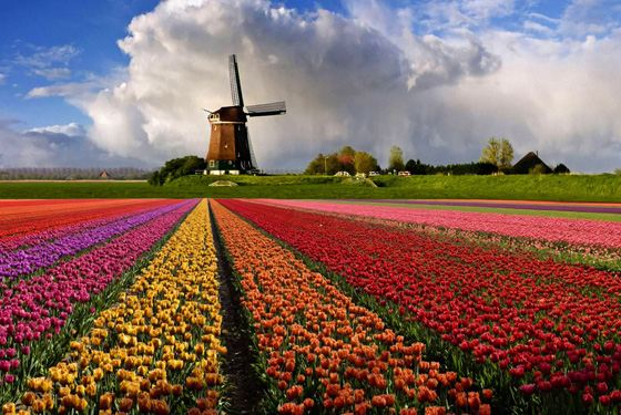 Богатая страна Голландия