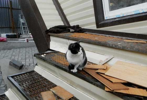 Кошке неплохо живется и в перевернутом доме