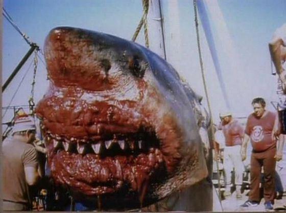 Самые интересные находки в желудках акул
