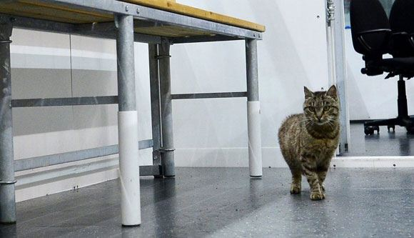 """A cat from Vladivostok airport was sheltered by the hockey club """"Admiral"""""""