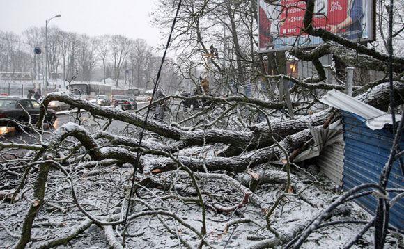 Сильный ветер обесточил полусотню подстанций в Калининградской области