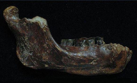 Фрагмент челюсти человека Пэнху