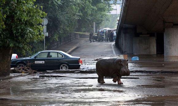 В Тбилиси затопило зоопарк – звери оказались на улицах города