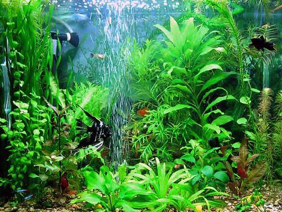 Компрессоры насыщают воду в аквариуме кислородом