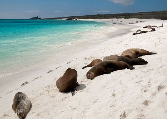 Галапагосские острова – место редкой красоты