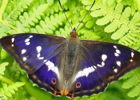 Крылья бабочки научите секс
