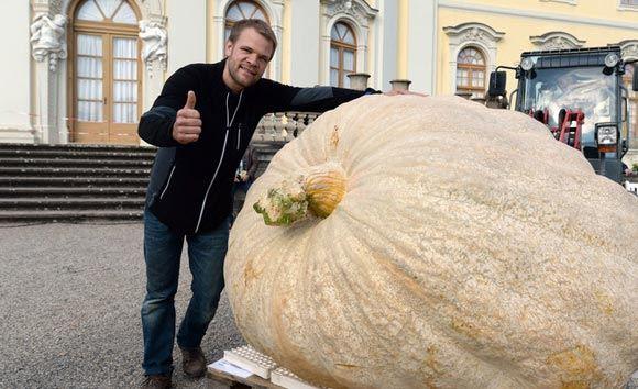 Швейцарский фермер поставил рекорд, во второй раз вырастив огромную тыкву