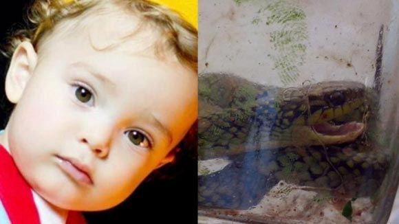 Полуторагодовалый ребенок в Бразилии загрыз ядовитую змею