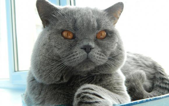 Кот по кличке Превентив завел блог на сайте МВД Ростовской области