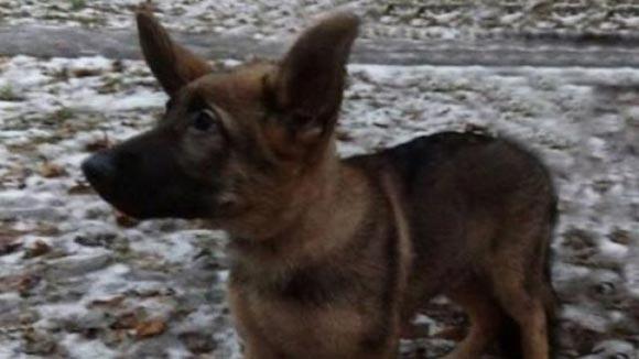 Глава МВД Франции пообещал оказать теплый прием российскому щенку Добрыне