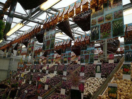 На огромном рынке Блуменмаркт продают не только цветы, но и луковицы тюльпанов
