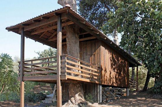 Дом на дереве из контейнера