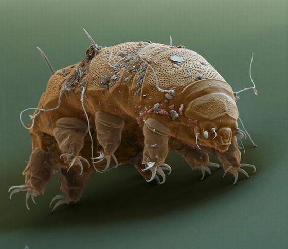 Slug - the most survivable creature on Earth
