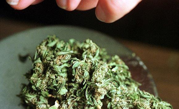 В США создали сумочку для безопасного переноса марихуаны