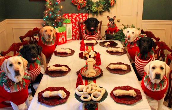 Американская пара сфотографировала собачью стаю за рождественским столом