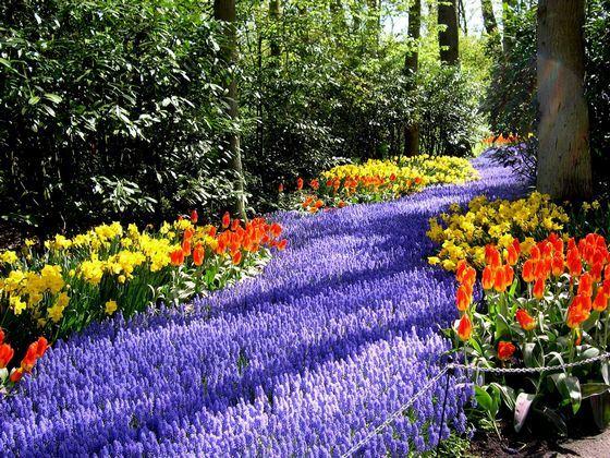 Кейкенхоф - самый красивый парк цветов