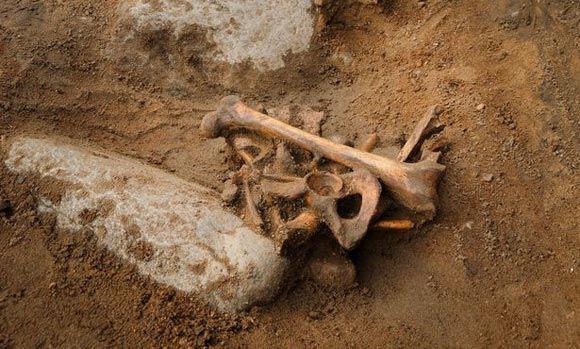 Скелет 500-летней давности был найден на детской площадке в Англии