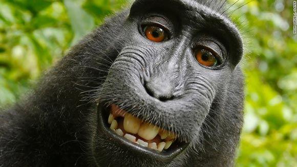 Суд Сан-Франциско отказал обезьянам в авторских правах на селфи