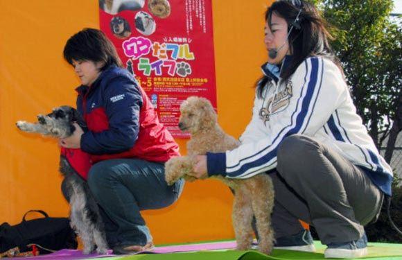 В Гонконге собрались 270 любителей дога-йоги