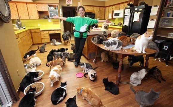 Американка Линея Латтанцио приютила у себя тысячу котов