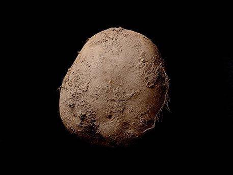 Фото картофелины продали на аукционе за миллион долларов