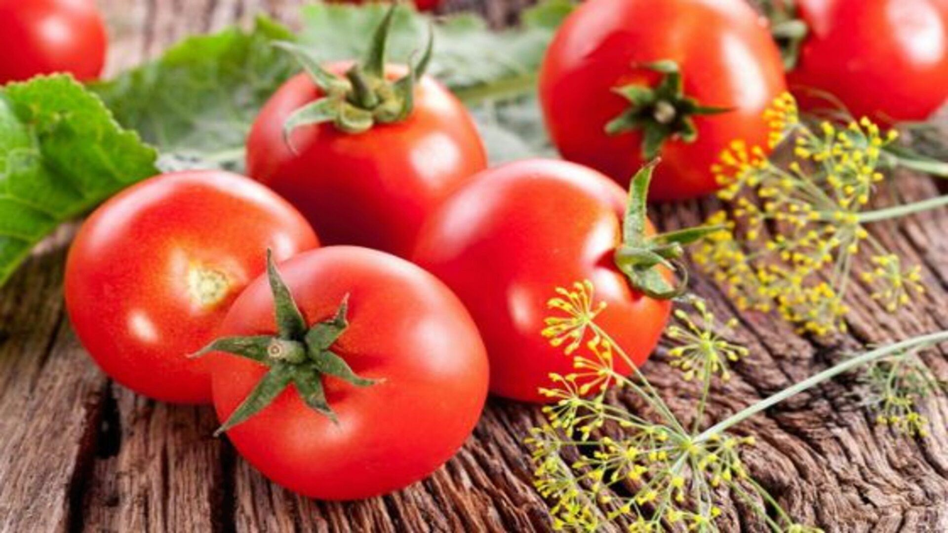 Tomatoes are good in fresh and in the blanks