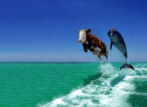 Интересно, что подумали моряки, увидев летящую с неба корову?