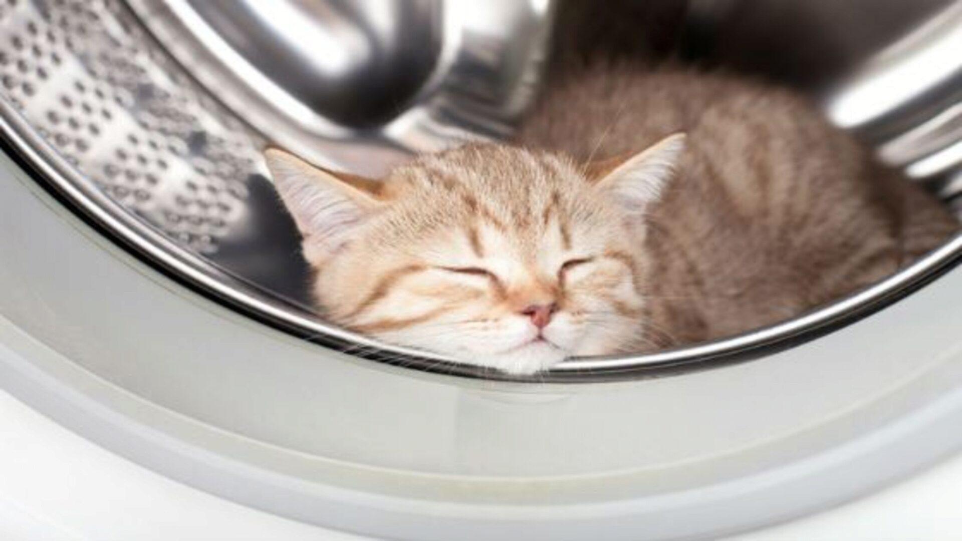 Объем стиральной машины выбирают в зависимости от размера семьи