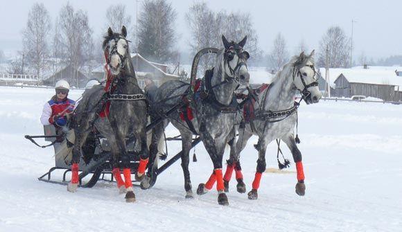 Праздник Коня послужил причиной многокилометровой автомобильной пробки