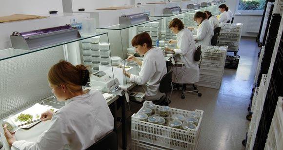 ФАС предложила игнорировать зарубежные патенты на лекарства