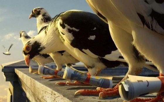 Почтовые голуби могут долго лететь с высокой скоростью