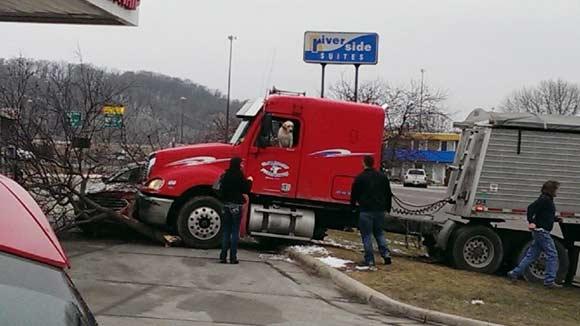 Собаки не умеют водить грузовики: фура с лабрадором врезалась в дерево и легковой автомобиль