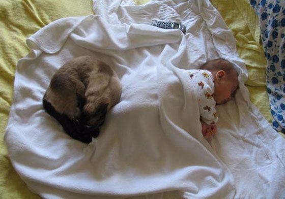 Спящая рядом кошка может быть опасна для ребенка